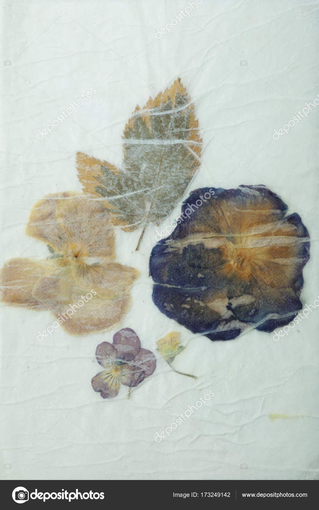 Dried Pressed Flowers Grunge Background Antique Flora Parchment