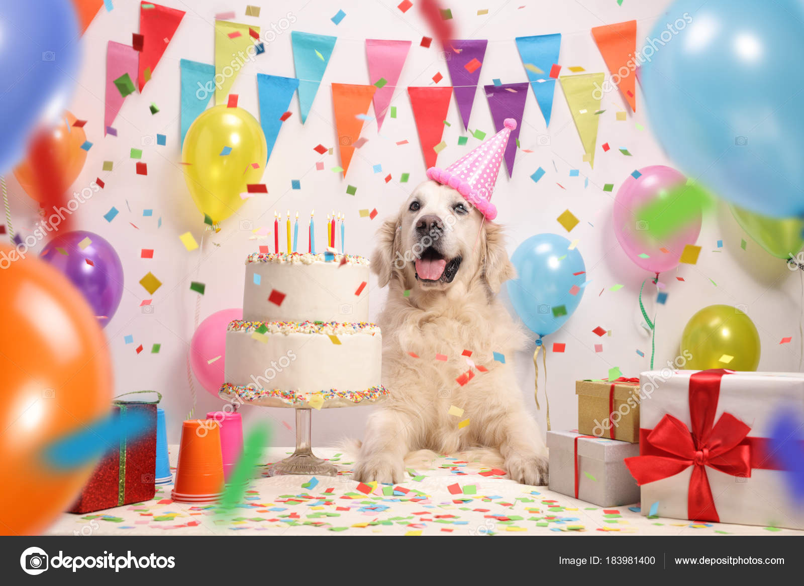 Labrador Retriever Dog Birthday Cake Party Hat Stock Photo