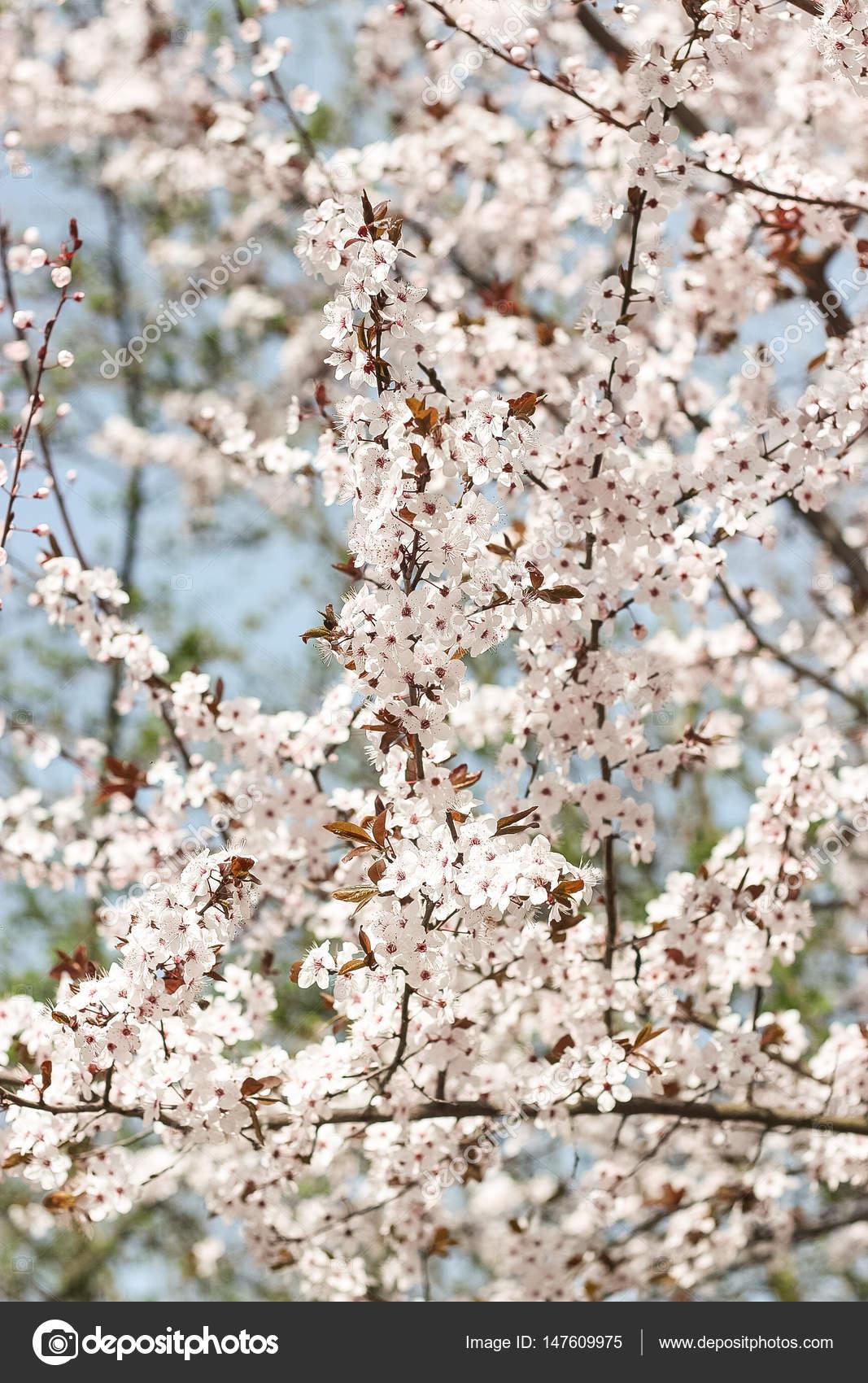Pictures Flowering Trees Flowering Trees Blooming Garden