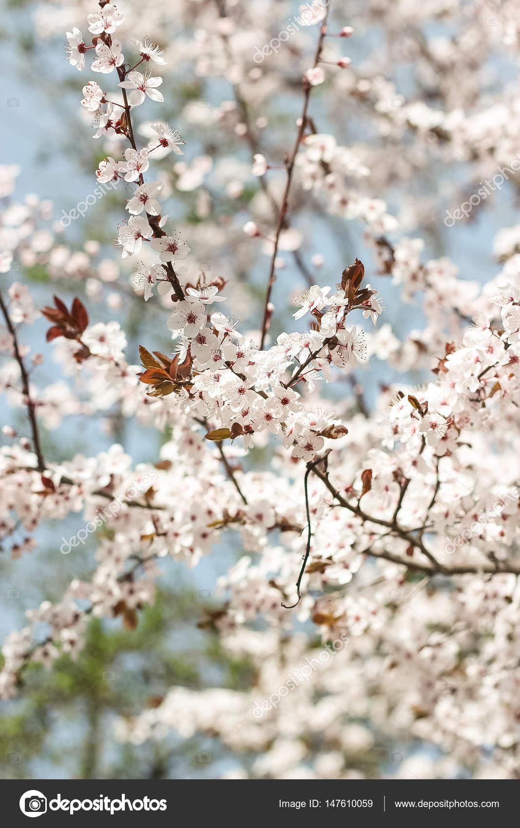 Flowering trees blooming garden white flowers warm spring flowering trees blooming garden white flowers warm spring photo by karelia89 mightylinksfo