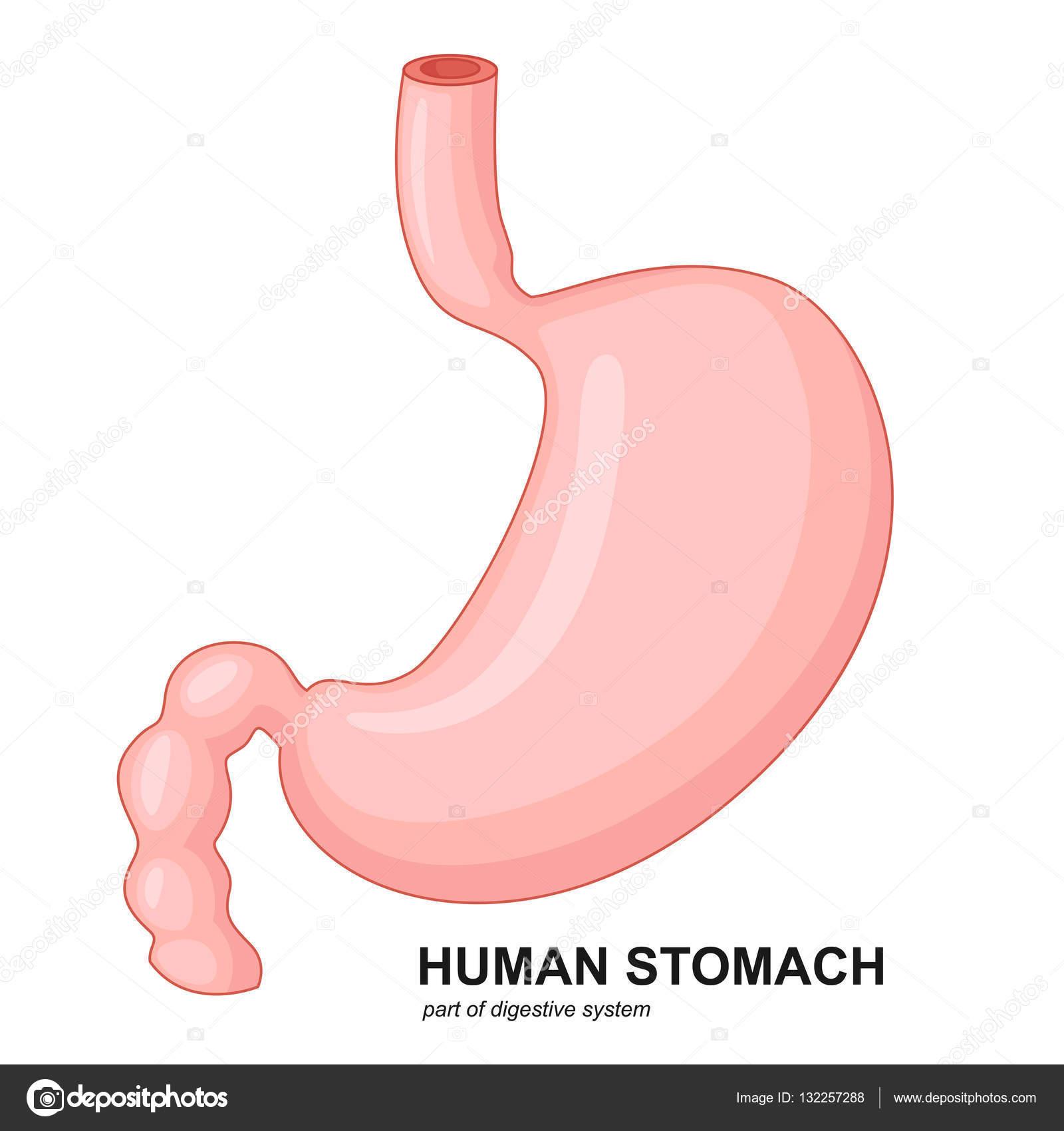 Menschlichen Magen cartoon — Stockvektor © fightingfear #132257288