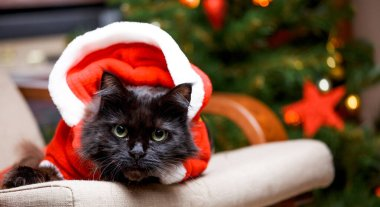 Picture of New Year's cat in Santa costume sitting at chair against background of Christmas tree with burning garland