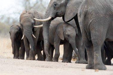 """Картина, постер, плакат, фотообои """"стадо слонов в пустыне африки постеры"""", артикул 350925586"""