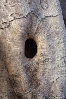 Oval hole in tree