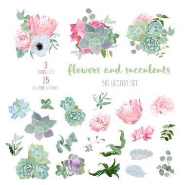 Succulents, protea, rose, anemone, echeveria, hydrangea, decorative plants big vector collection