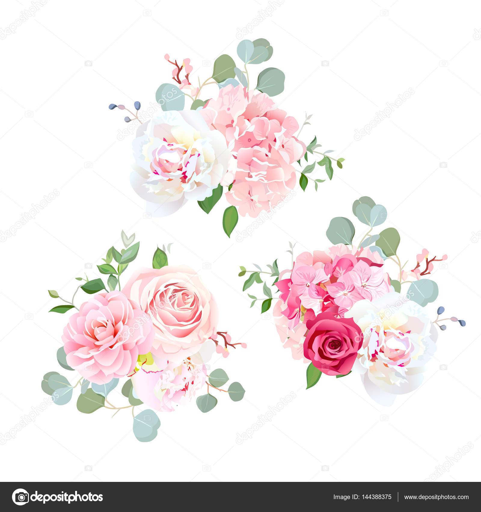 Mazzi Di Rose Peonia Camelia Ortensia Ed Eucalipto Vettoriali