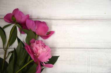 Peony on white rustic wooden background. Copy space.
