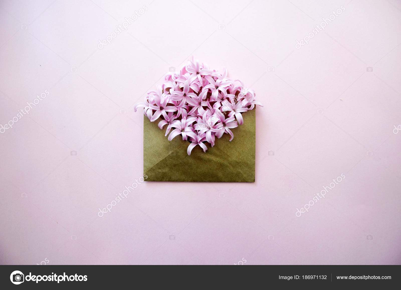 Hyacinth Pink Surprise Dutch Hyacinth Spring Flowers The Perfume