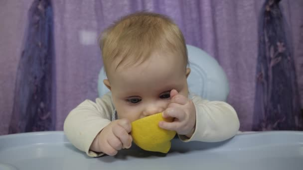 A small boy tastes yellow lemon