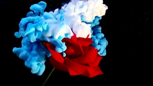 Zpomalit video červené růže a modré a bílé akvarel inkoust ve vodě na černém pozadí. Silný výbuch barev. Super trendový spořič obrazovky. Koncept Mezinárodního dne žen 8. března.