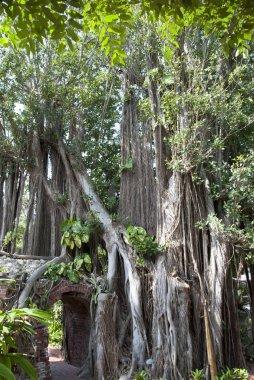 Key West Botanical Garden Trees
