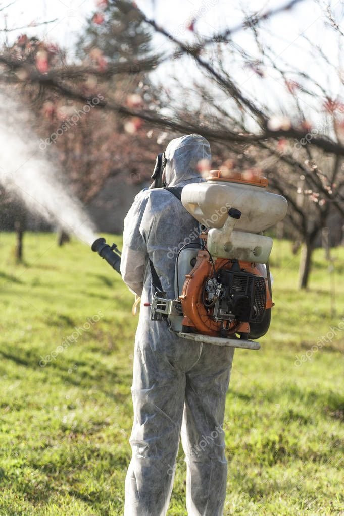 Young farmer spraying apricot trees with chemicals in the orchar