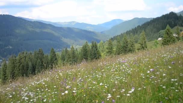 Horské oblasti s květy den taymlaps