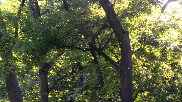 Nyár pihe legyek az erdőben