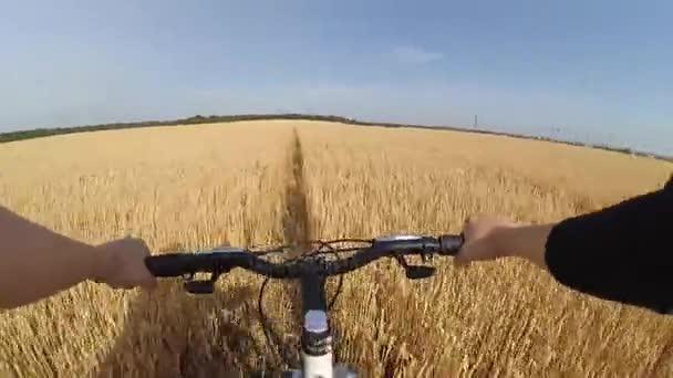 Muž cyklista na kole projíždí pšeničné pole