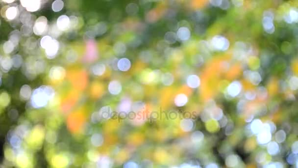 Blurred background leaves on tree green pink