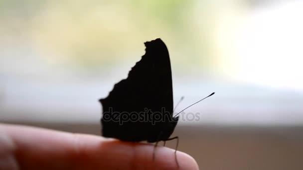 Pillangó a kezét