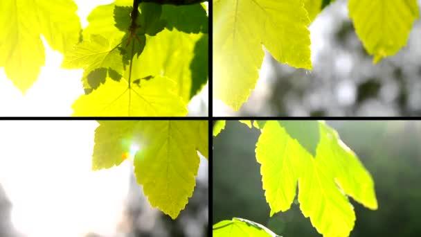 Green leaves close wind sun