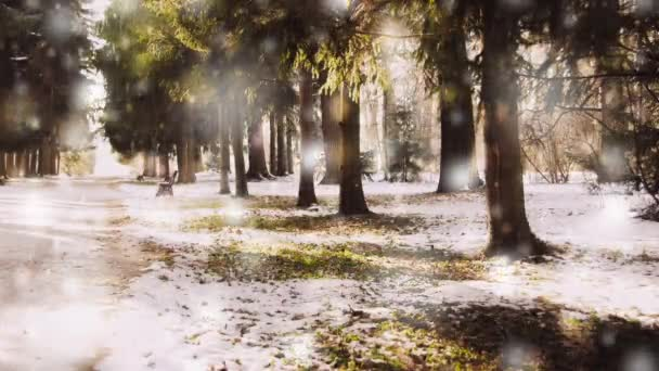 Winterpark an einem sonnigen Tag. Bäume, schneebedeckte Straßen an kalten Tagen.