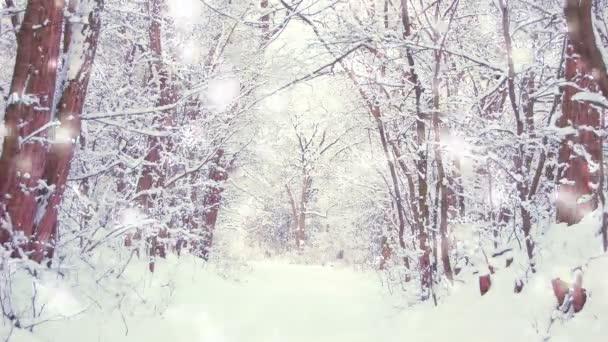 Fa fenyő fenyő, esik a hó, hóesés, elvarázsolt erdő télen.