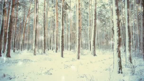 Tree pine spruce in magic forest winter with falling snow, snowfall.