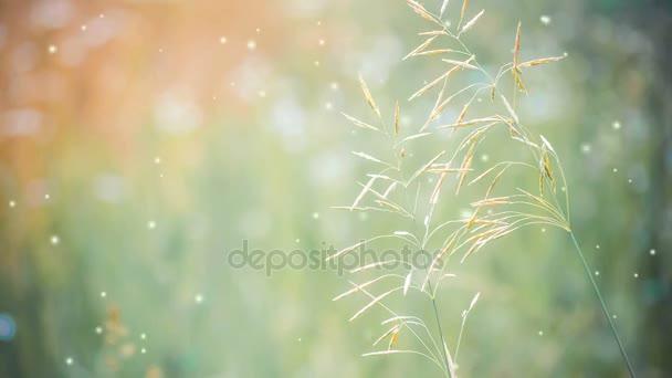 zwei Gras Nahaufnahme auf einem Hintergrund von grünen Unschärfe Sommer.