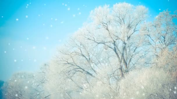 Beautiful big trees in the snow against the blue sky, the filter.