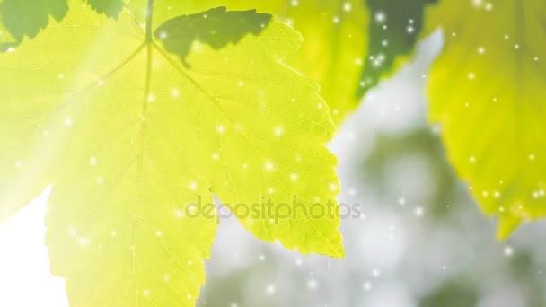 Jarní listové detail světla, efekt filtru