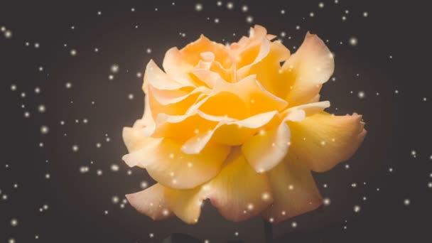 Orange rose on a black background close-up filter or effect