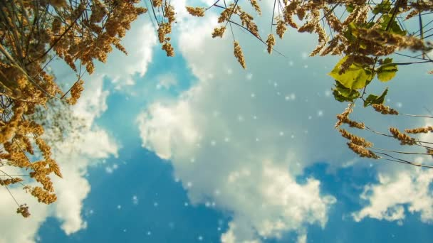 kilátás az ég, fehér felhők, fekszik a fűben