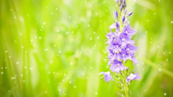 Gyönyörű lila réten a virág egy homályos zöld háttér