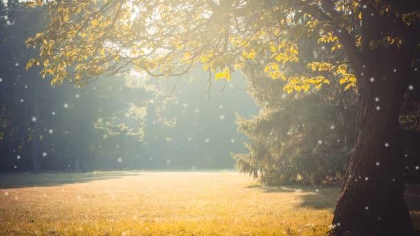 Glade větve s listy slunečním světle žlutý filtr