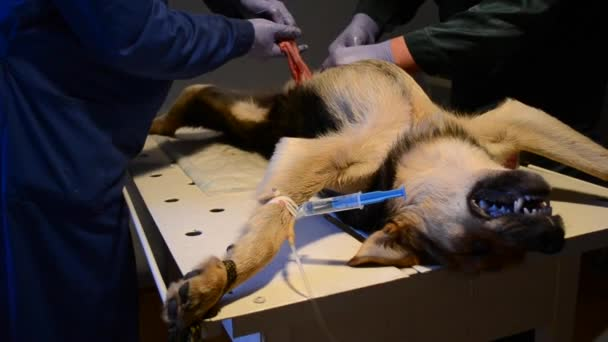 Castration Dog Stock Videos Royalty Free Castration Dog Footages Depositphotos 174