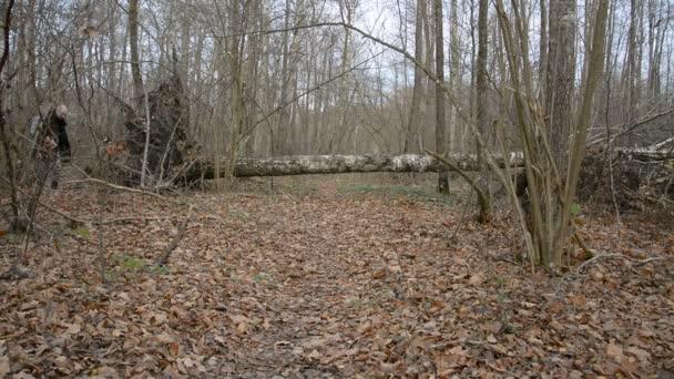 Bílý muž kráčí po stezce v podzimním lese