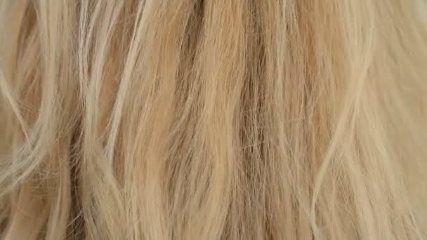 Blondýny ženské vlasy bílé pozadí a textura abstraktní