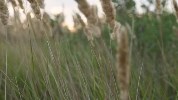 close up of grass field flowers at sunset