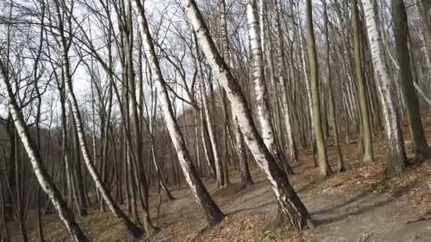 Střílení z jarního dřeva.