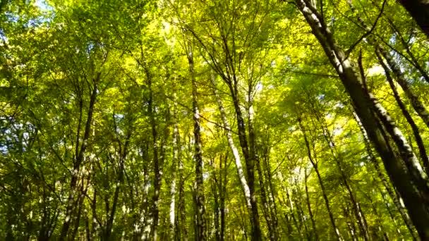 Podzimní stromy v říjnu. Natáčení v pohybu.