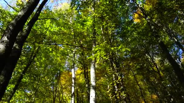 Podzimní stromy v říjnu.
