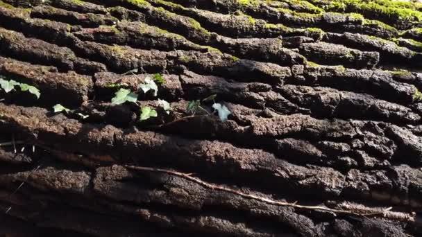 Kmen stromu kůra pokrytý mechem.