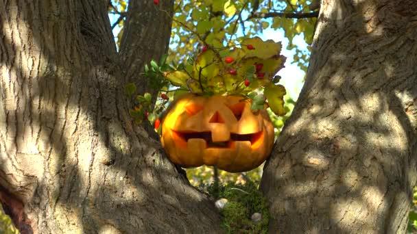 Kísérteties halloween tök. Lövöldözés egy fán az erdőben. Októberben forgatás.