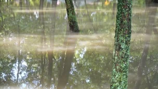 Pudlujte v parku po dešti. Stromy ve vodě.