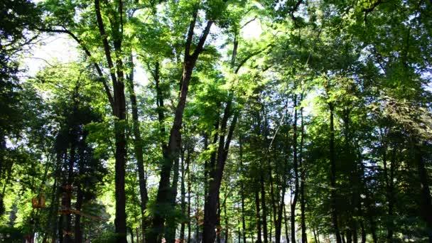 Dívka teenager překonává překážky mezi stromy ve výšce. Natáčení v létě.
