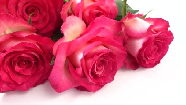 vörös rózsák fehér alapon.