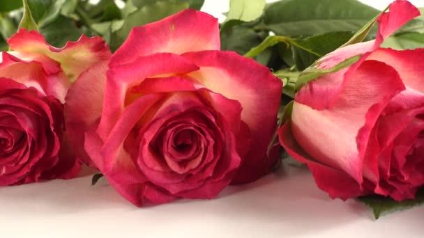 červené růže na bílém pozadí.