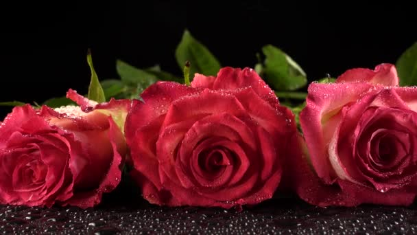 Red roses on a black background.