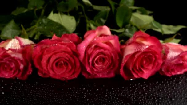vörös rózsák fekete alapon.