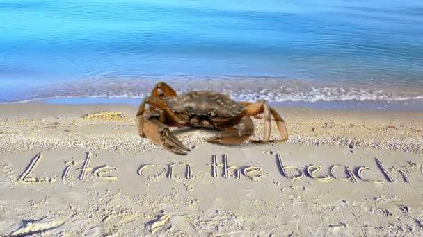Rákot és egy feliratot a homokra, a partra. Felirat élet a tengerparton a homokban.
