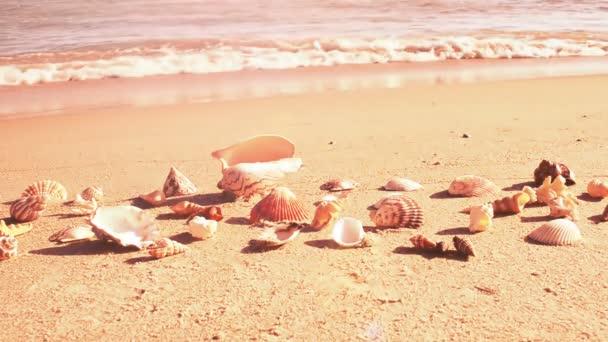 Kagylók a parton. Lövöldözés a parton.
