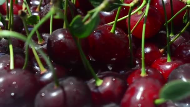 Cherry, shooting in motion. Filming of fruit.